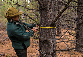 wes-bend-project-measure-tree[1]