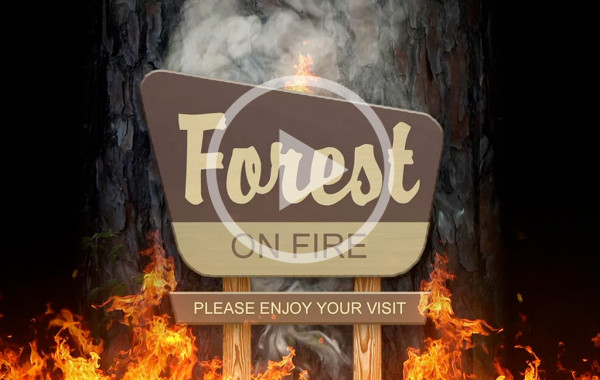 Forests on Fire video
