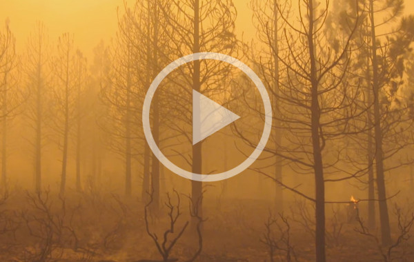 USFS Pole Creek Fire Video