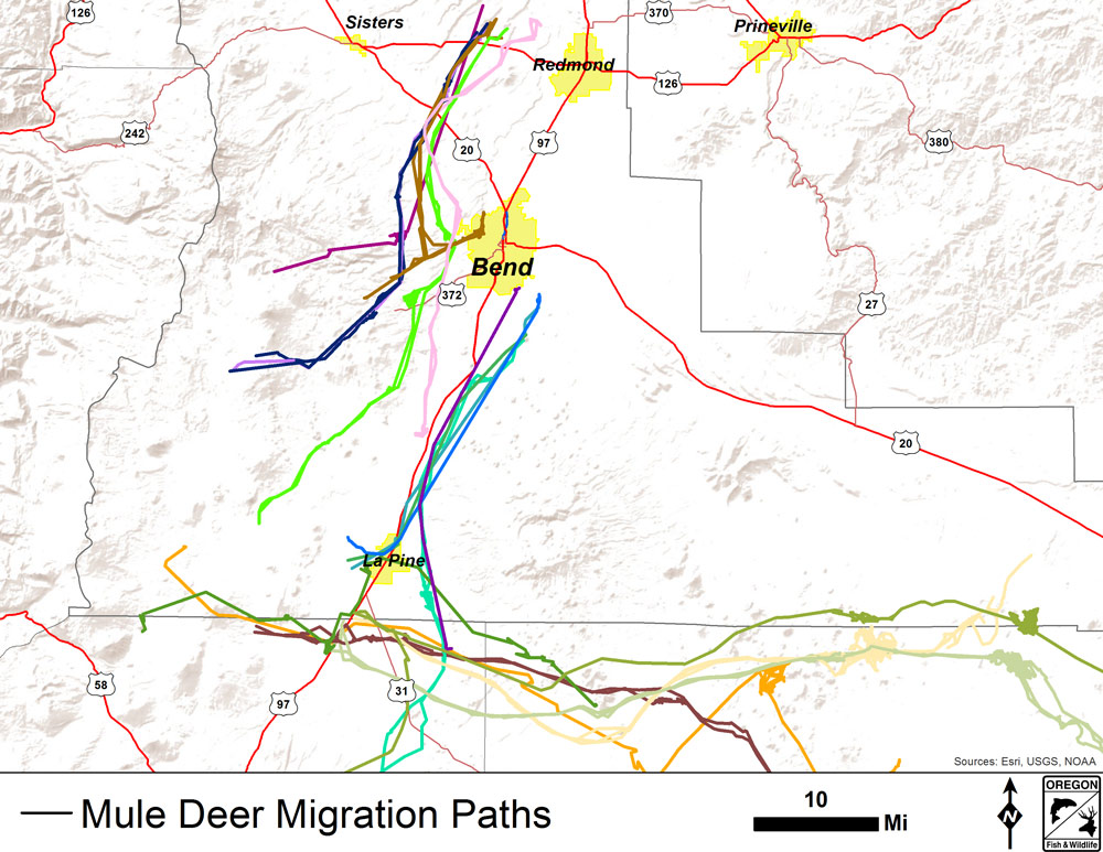 Map Of Elk Migration Pictures To Pin On Pinterest - PinsDaddy