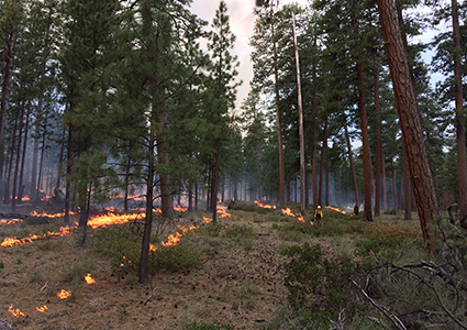 2015 Central Oregon TREX applying fire under carefully prescribed conditions to help restore this ponderosa forest.