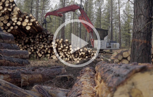 Forest Restoration in the Deschutes NF