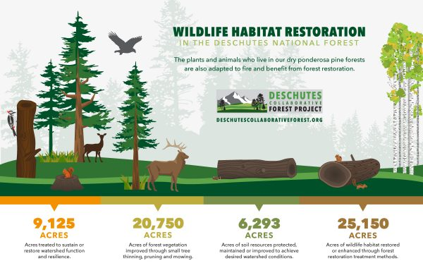 Infographic: Wildlife Habitat Restoration