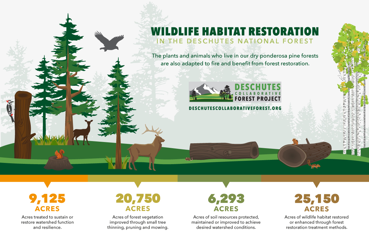deschutes-national-forest-wildlife-habitat-restoration