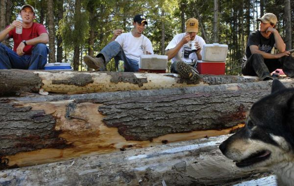 Forest Restoration Creates Logging Jobs