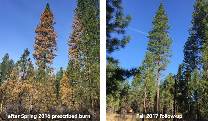 plants trees wildlife after prescribed fire