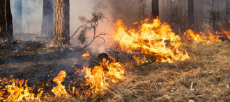 Prescribed Burning for a Healthier Forest and Safer Community