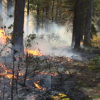 Prescribed Burning in Progress