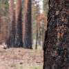 Why Prescribed Fire Matters: Healthier forests. Safer communities