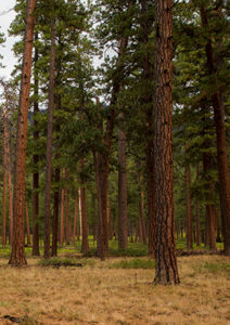 healthy forest west bend project central oregon
