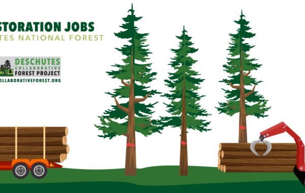 Infographic: Creating Jobs in the Forest