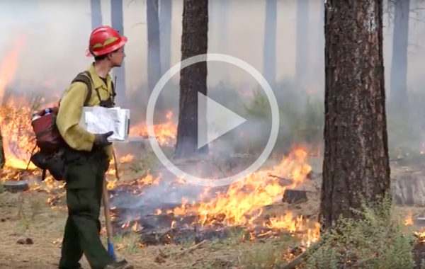Prescribed Fire in the Deschutes Forest